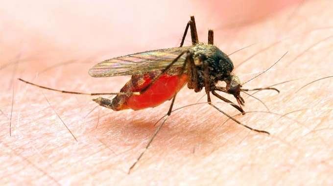 Malaria 680x380 1
